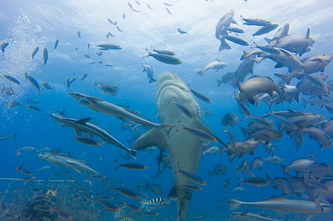 3 Tage: 2 Nächte/2 Inseln: Tauchen und Schnorcheln mit den Haien