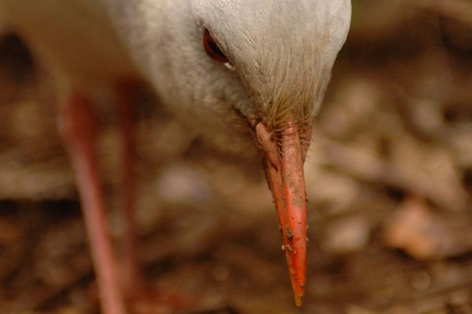 Neukaledonien: Die Ostküste ein Hot Spot biologischer Vielfalt
