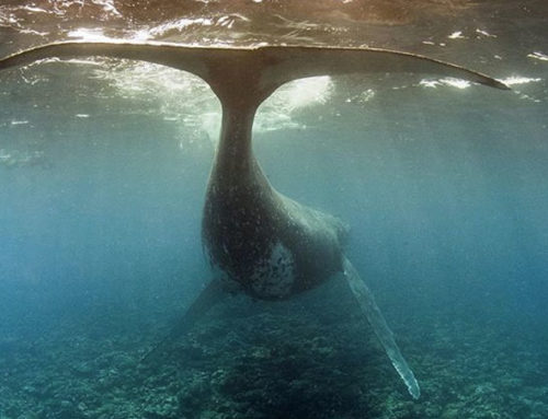 Ha'apai: zurück zur Langsamkeit in Polynesien