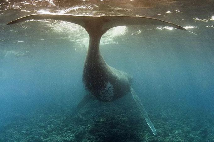 urlaub Südsee - Ha'apai: zurück zur Langsamkeit in Polynesien