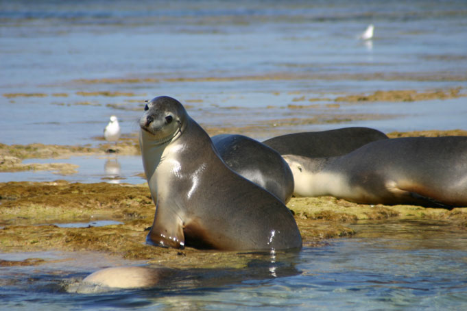 3 Day Sealion and Outback Experience Port Lincoln