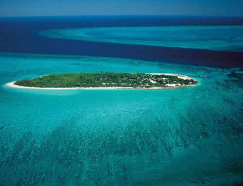 Heron Island: Tauchen und Tierwelt am Great Barrier Reef