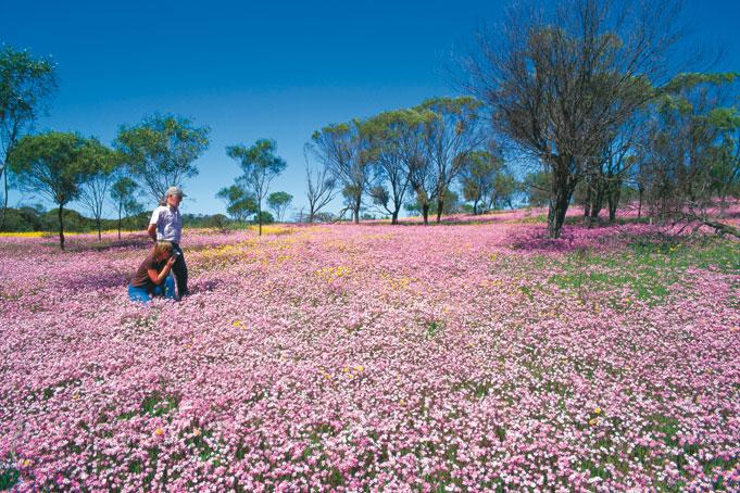 Grandioses Western Australia