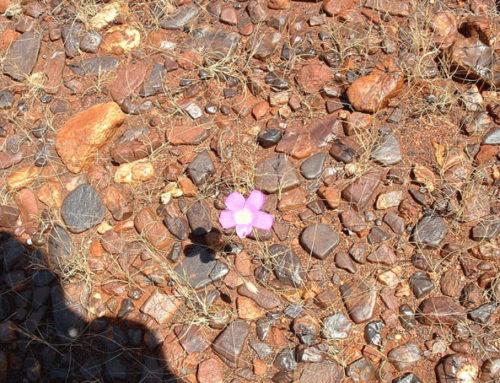 Outback Steinwüsten die Gibson- und Sturts Steinige Wüste