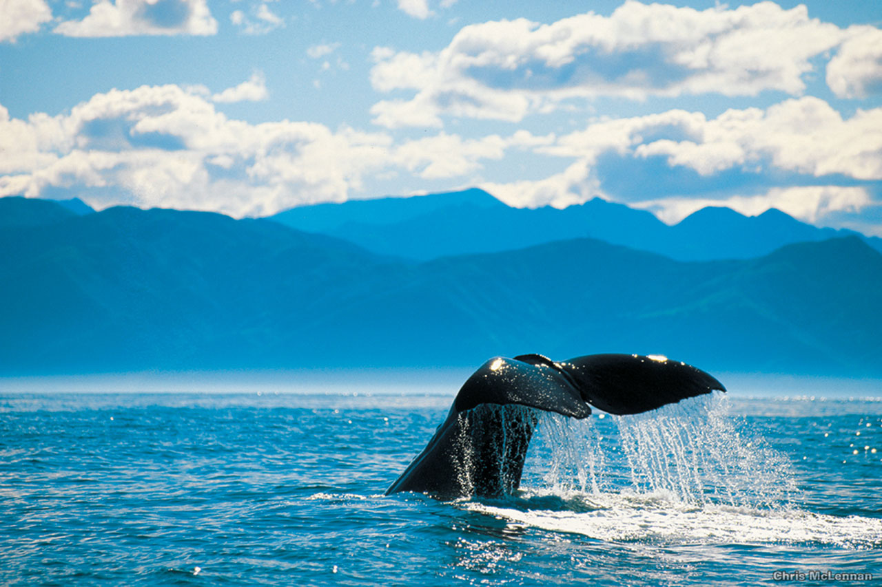 Kaikoura Whale Watch Tour ab Christchurch