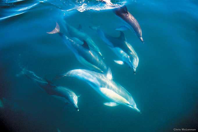 Swimmen und Schorcheln mit Delfinen in der Bay of Islands