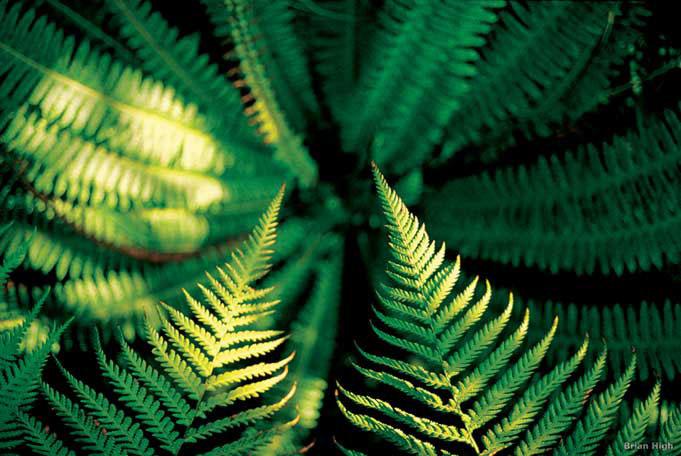 Besuch des Botanikgarten von Dunedin