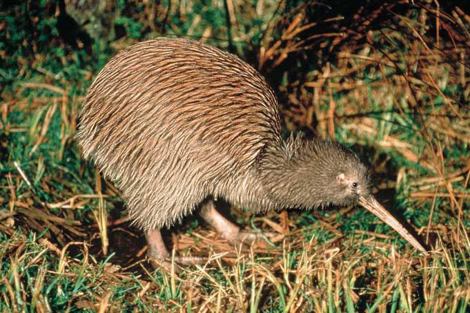 Wunder der Tierwelt: Christchurch to Auckland