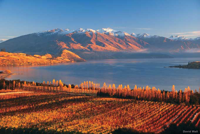 Food and Wine Tour: Auckland to Christchurch