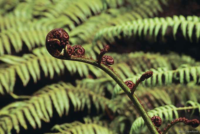 Kaimai Mamaku Forest Park, eine Art Arche Noah für Pflanzen